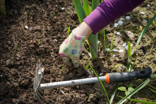 work-in-the-garden-2432111_1920-650
